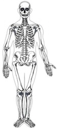 Cirugía de Columna Vertebral